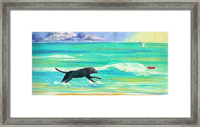 Islamorada Dog Framed Print by Anne Marie Brown
