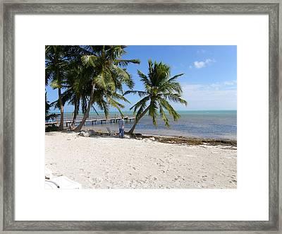 Islamorada Palms Framed Print by Karen Critcher
