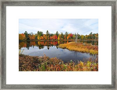 Island Brook  Framed Print by Catherine Reusch Daley