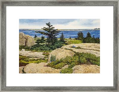 Island Harebells Framed Print by Tom Wooldridge