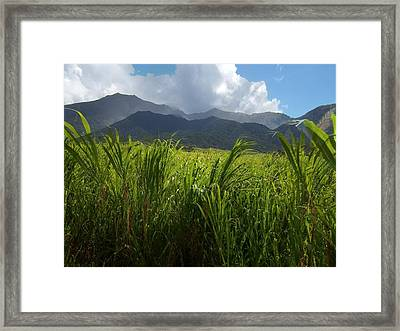 Island Paradise Framed Print by David and Lynn Keller