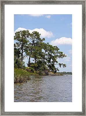 Island Pines Framed Print