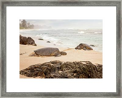 Island Rest Framed Print by Heather Applegate