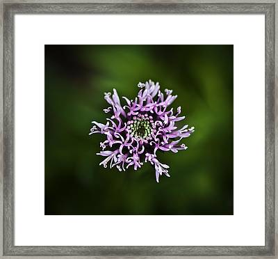 Isolated Flower Framed Print