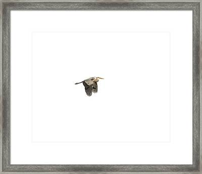 Framed Print featuring the photograph Isolated Great Blue Heron 2015-5 by Thomas Young