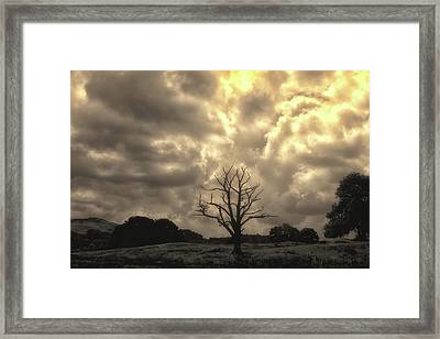 Isolated Framed Print by Martin Newman
