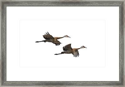 Isolated Sandhill Cranes 2016-1 Framed Print