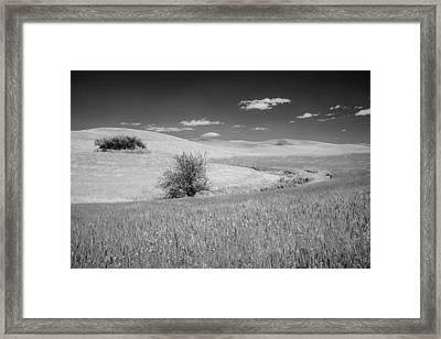 Isolation On The Plains Framed Print by Jon Glaser