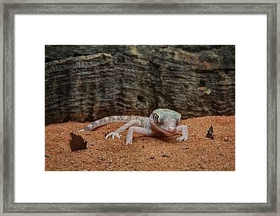 Framed Print featuring the photograph Israeli Sand Gecko - 1 by Nikolyn McDonald