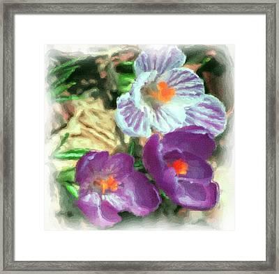 Ist Flowers In The Garden 2010 Framed Print by David Lane