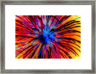 It Came Out Of The Blue Framed Print