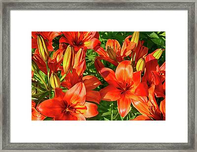 It Is A Lot Of Red Lilies Framed Print