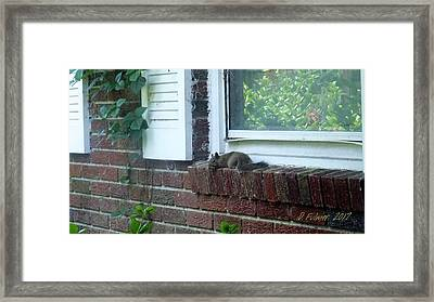 Framed Print featuring the photograph It Is Cool Here In The Shade by Denise Fulmer