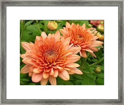 It Is Spring Framed Print by Kathy Bucari