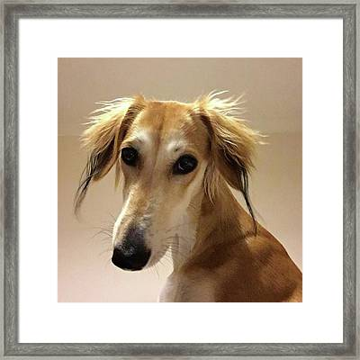 It Looks Like It Will Be A Bad Hair Day Framed Print