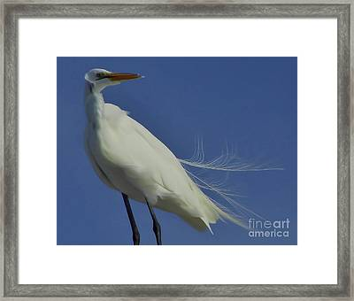 It Sure Is Windy Out Here Framed Print by D Hackett