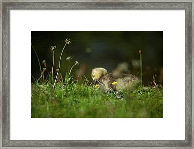 It Takes The Itch Out Of Life Framed Print by Karol Livote
