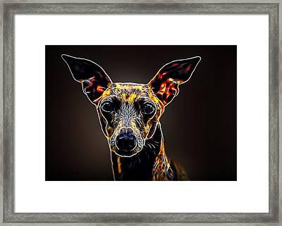 Italian Greyhound Framed Print by Alexey Bazhan