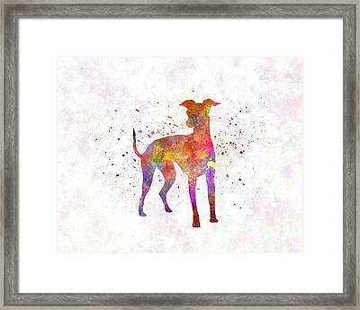 Italian Greyhound In Watercolor Framed Print