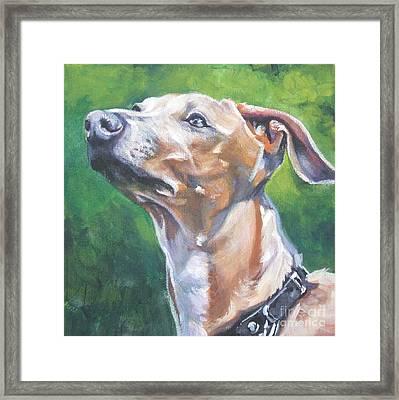 Italian Greyhound Framed Print by Lee Ann Shepard