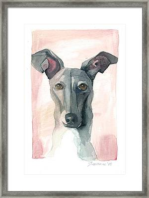 Italian Greyhound Framed Print by Mike Lawrence