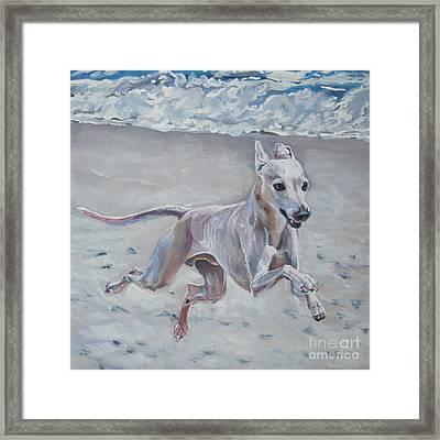 Italian Greyhound On The Beach Framed Print by Lee Ann Shepard