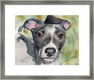 Italian Greyhound Watercolor Framed Print