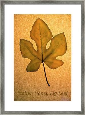 Framed Print featuring the photograph Italian Honey Fig Leaf 4 by Frank Wilson