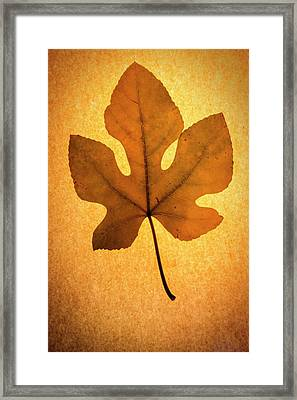 Framed Print featuring the photograph Italian Honey Fig Leaf by Frank Wilson