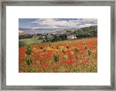 Italian Poppy Field Framed Print