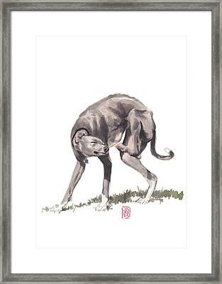 Itchy Italian Framed Print by Debra Jones
