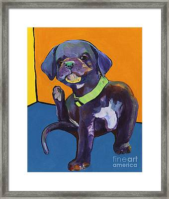 Itchy Framed Print by Pat Saunders-White