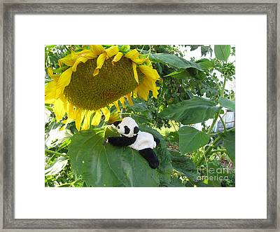 Framed Print featuring the photograph It's A Big Sunflower by Ausra Huntington nee Paulauskaite