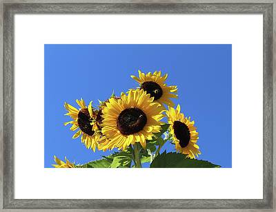 It's A Blue Sky Day Framed Print