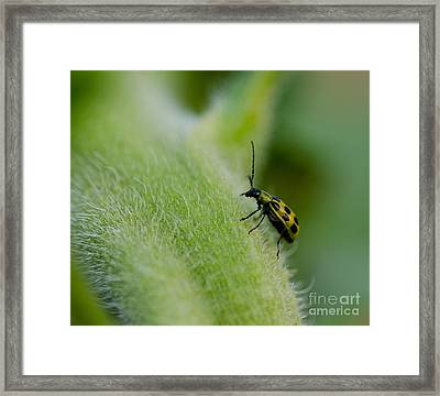 It's A Bugs Life Framed Print by Nick  Boren