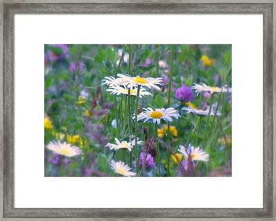 It's A Daisy Kind Of Day Framed Print