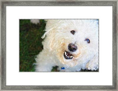 It's A Dog's Life Framed Print by Terry Wallace
