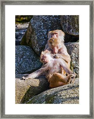 Its A Hard Life Framed Print by Andrew  Michael