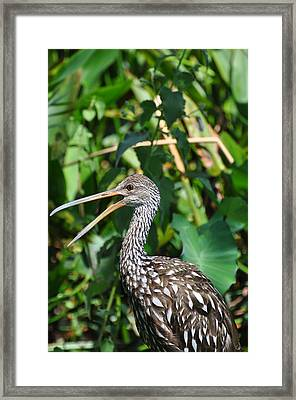 It's A Jungle Out There Framed Print by Rose  Hill