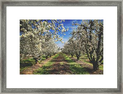 Framed Print featuring the photograph It's A New Day by Laurie Search