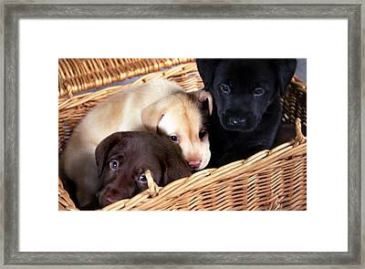 It's A Picnic Framed Print by Skip Willits