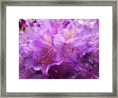 It's A Rainy Day Framed Print