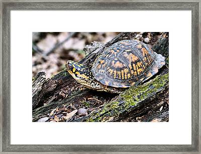 It's A Scary World Out There Framed Print
