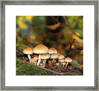 It's A Small World Mushrooms Framed Print by Jennie Marie Schell