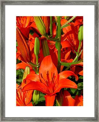It's All About Red Framed Print