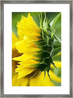 It's All About The View Framed Print by Tiffany Erdman