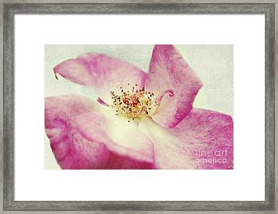 Its Beauty Framed Print by Angela Doelling AD DESIGN Photo and PhotoArt