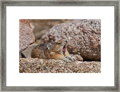 It's Been A Long Day Framed Print