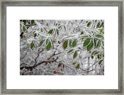 It's Cold Outside Framed Print by Mike Eingle
