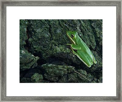 Its Hard To Be Green Framed Print by Douglas Barnett